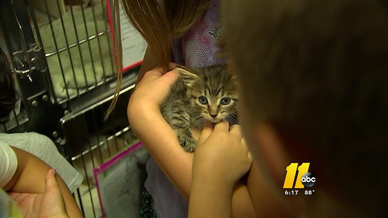 Kids 4 Critters gives students a close look inside Wake County Animal Center