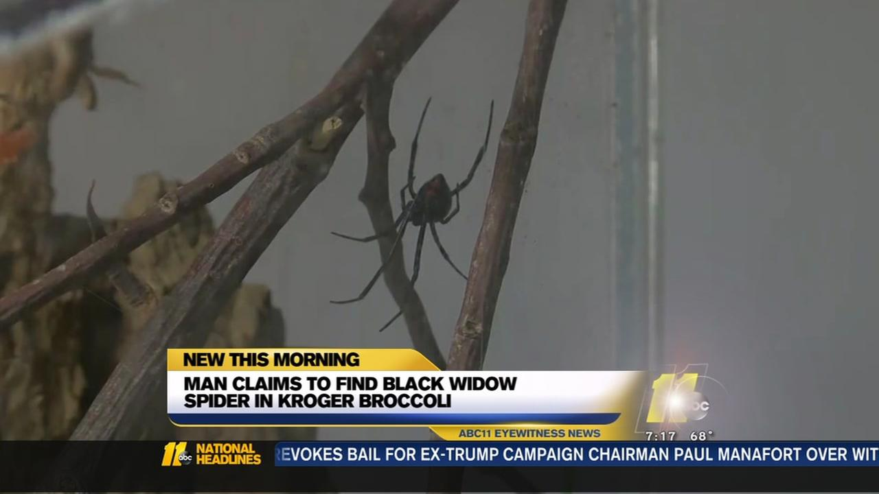 A Toledo man claims he found a black widow spider in a head of broccoli brought from the Maumee Kroger.