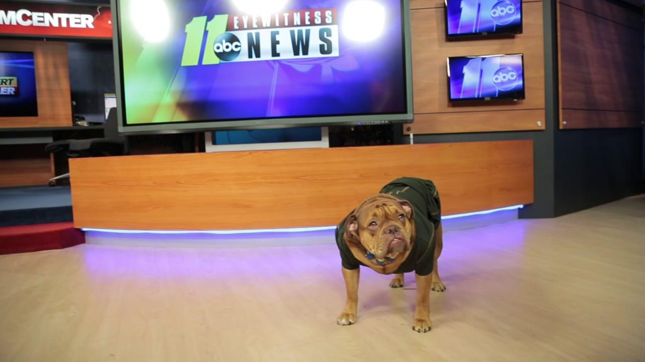 Take Your Dog To Work Day at ABC11