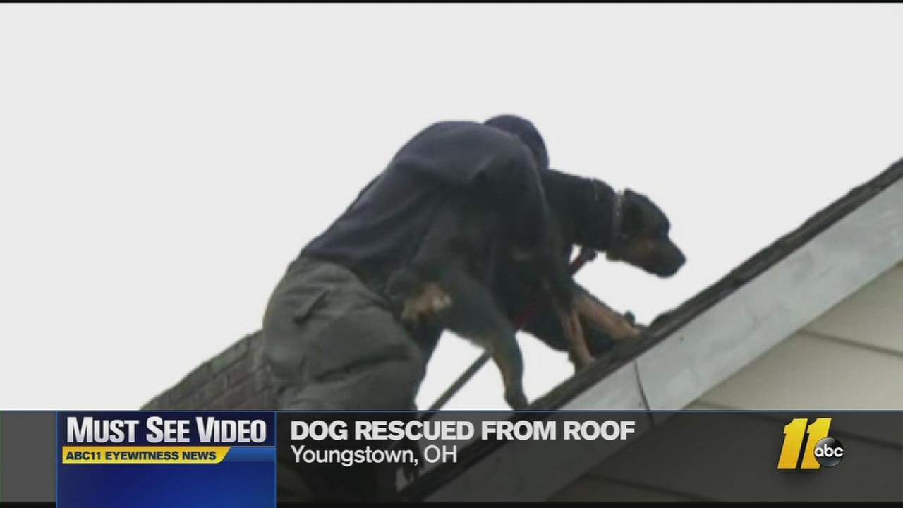 Must See Videos Firefighters Rescue Dog From Roof Abc11 Com