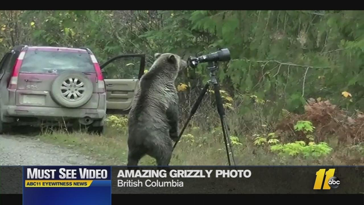 The bear was very curious about this camera