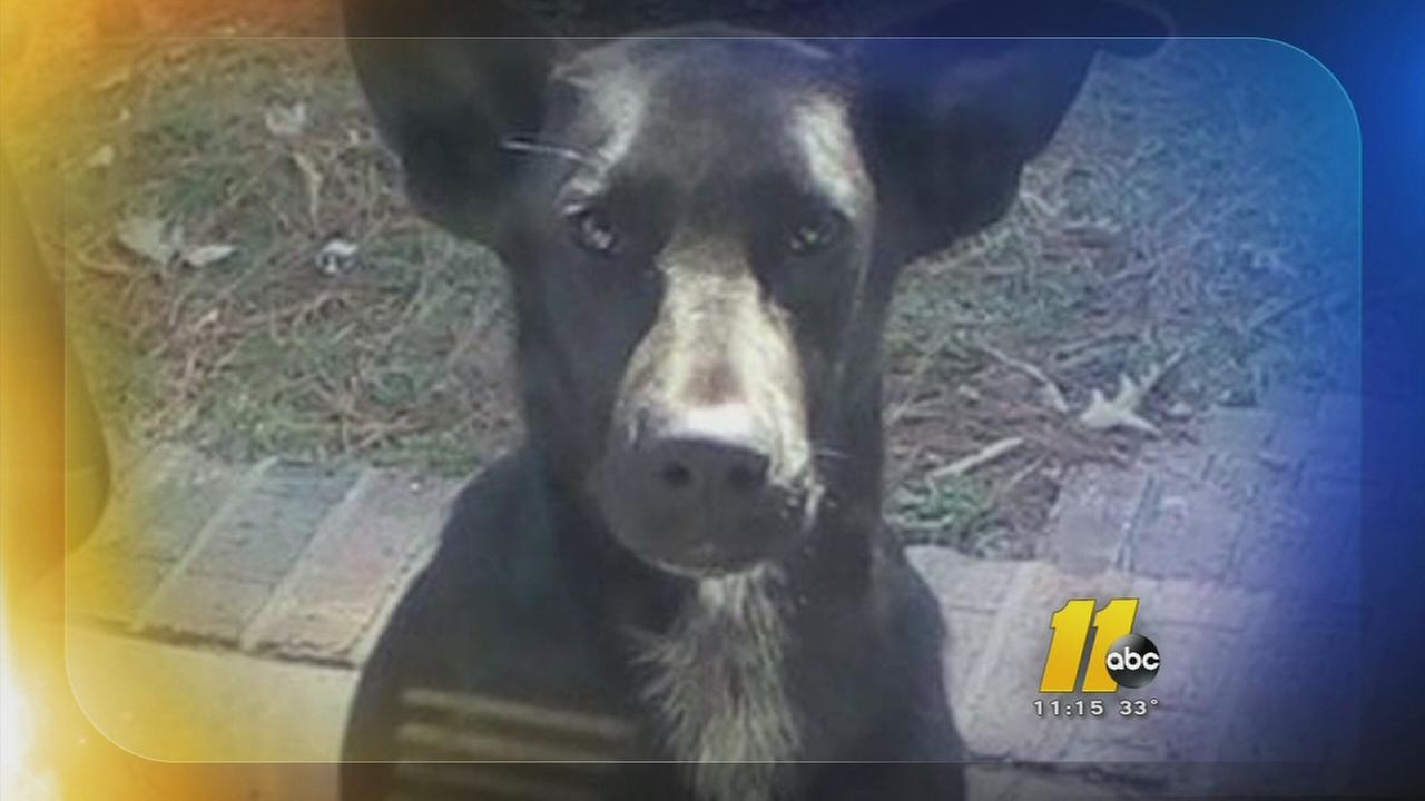 Authorities search for puppy killer - Riley