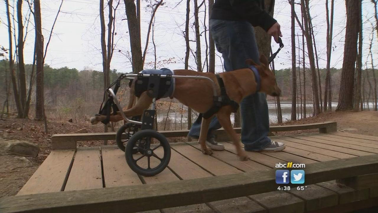 Dog in wheelchair raises abuse awareness