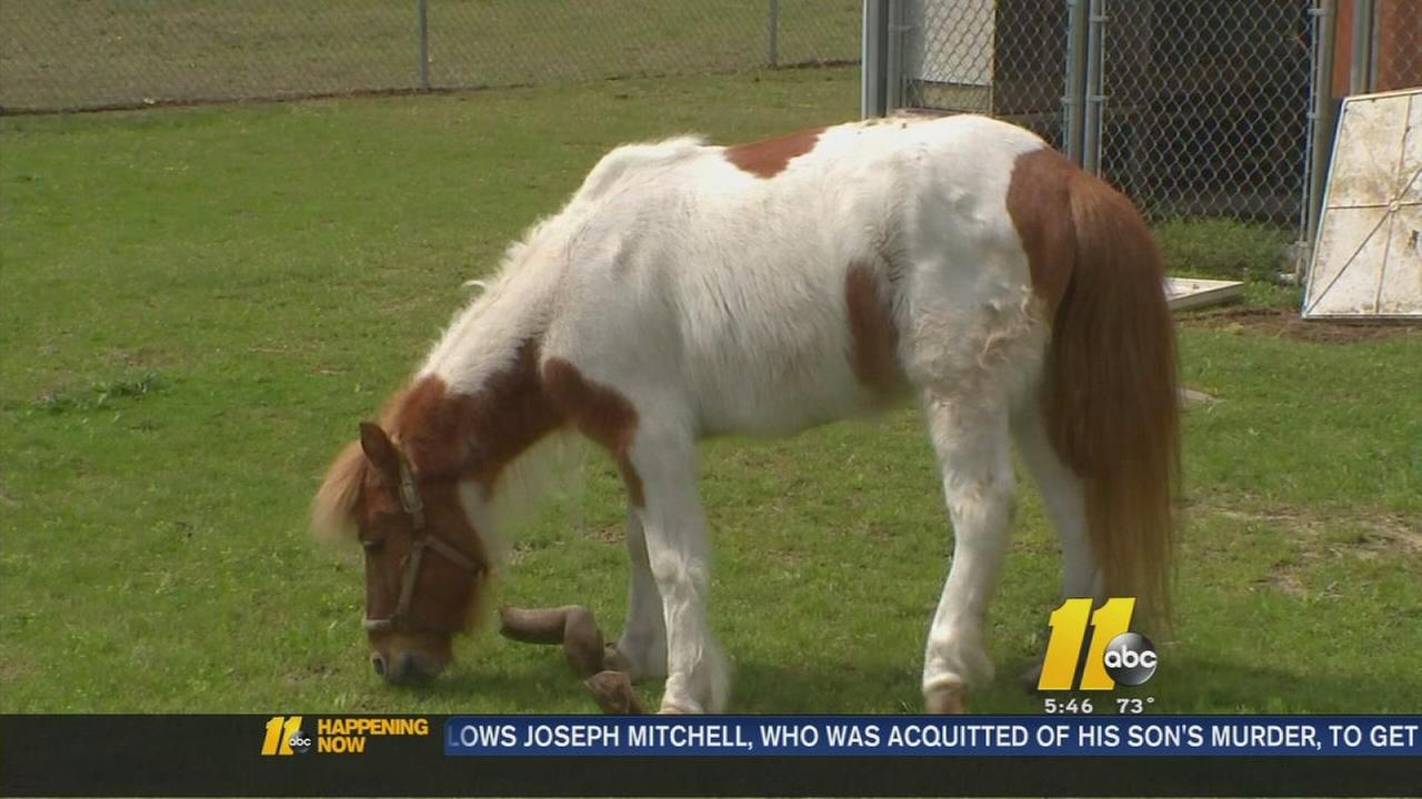 Update: Abused pony gets new home