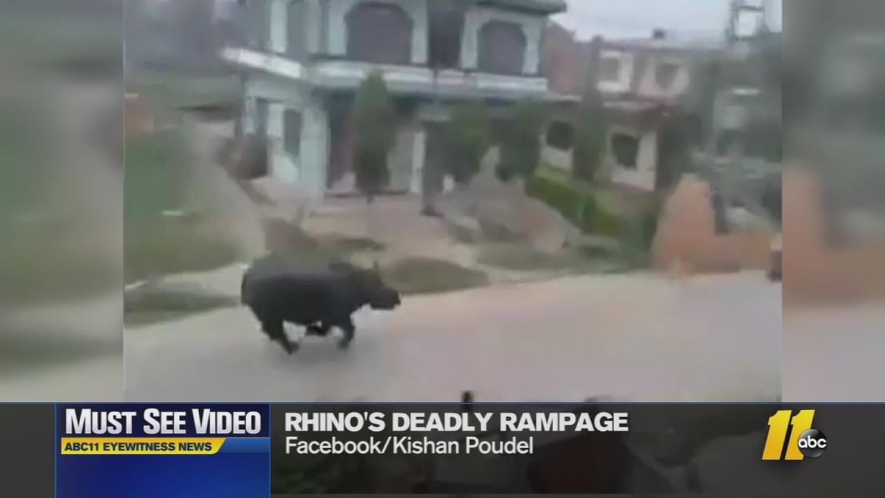Must-See Videos: Angry rhino terrorizes town