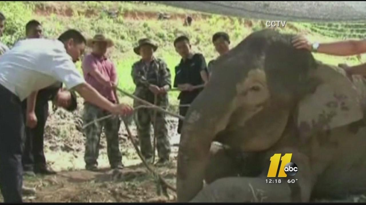 Elephant rescued from mud