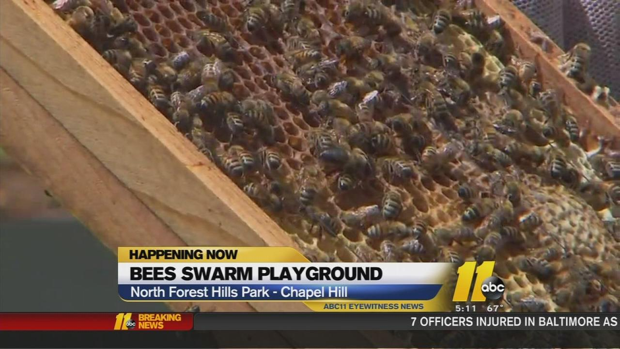 Swarm of bees shuts down playground