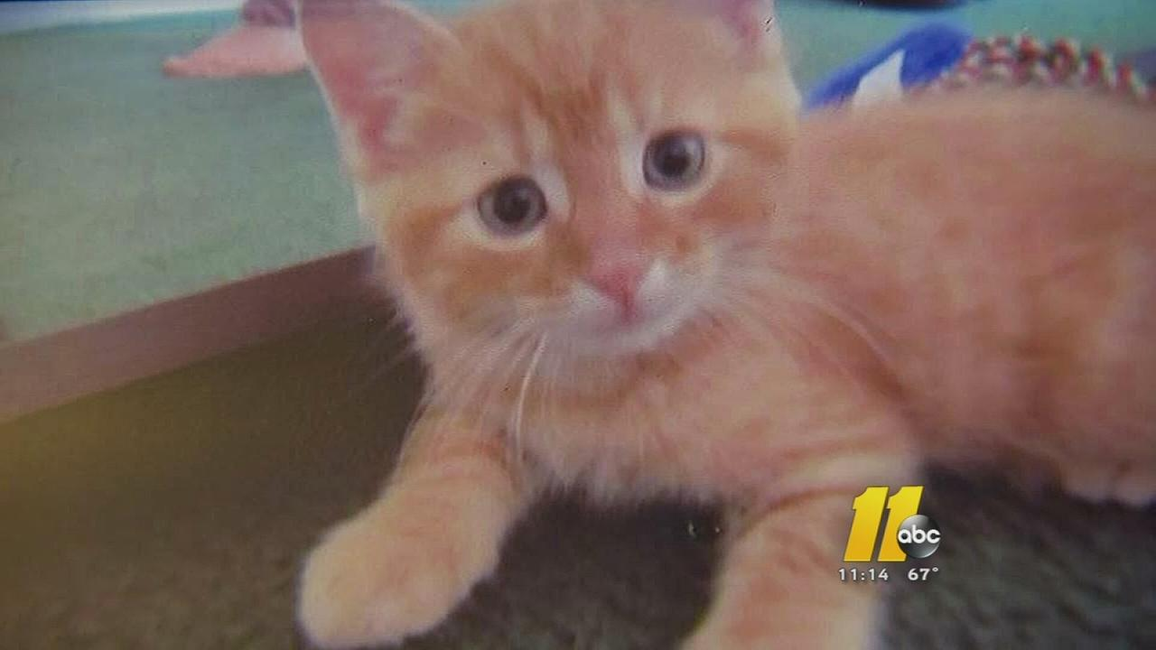 I-Team: Veterinarian mistake leads to cats death