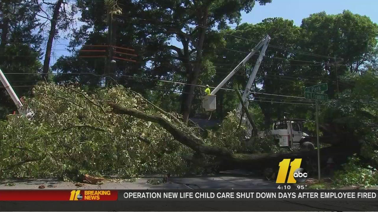 Storm damage highlights concern for older trees in Chapel Hill