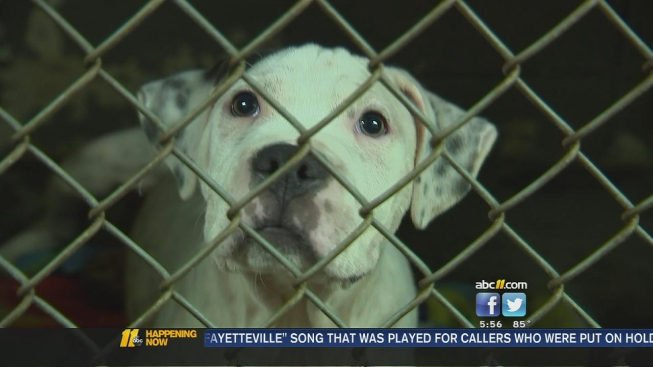 Crowded animal shelter needs funds