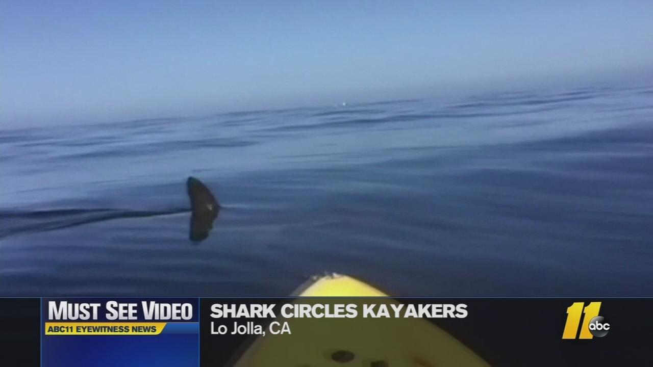 Must-see video: Shark circles kayekers
