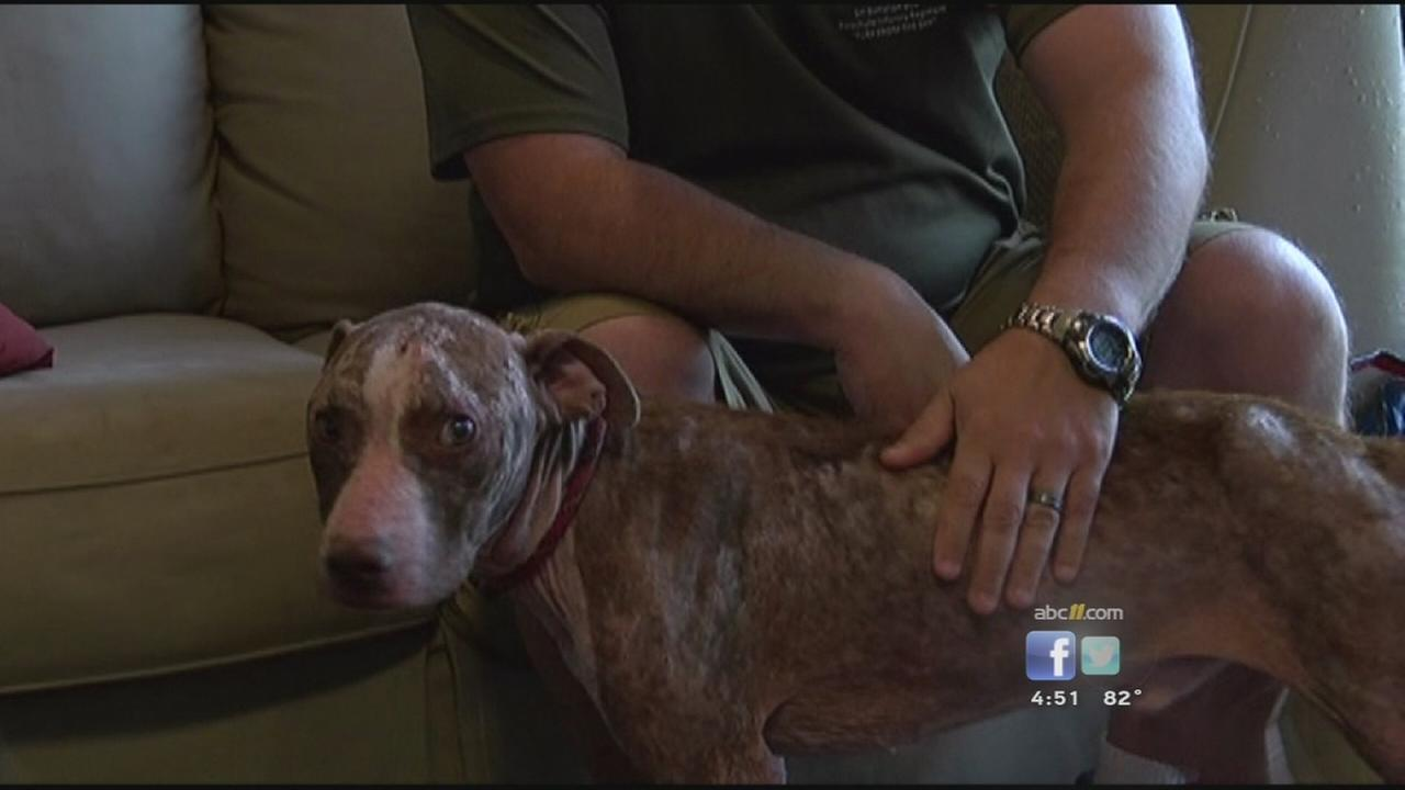 Fort Bragg soldier saves dog