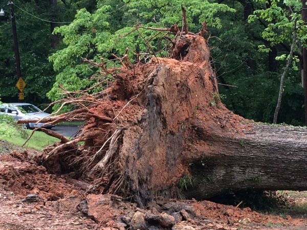 <div class='meta'><div class='origin-logo' data-origin='none'></div><span class='caption-text' data-credit='WTVD Photo/ I-Witness Photo'>Thunderstorms dumped heavy rain and downed some trees in parts of the central North Carolina Wednesday afternoon.</span></div>