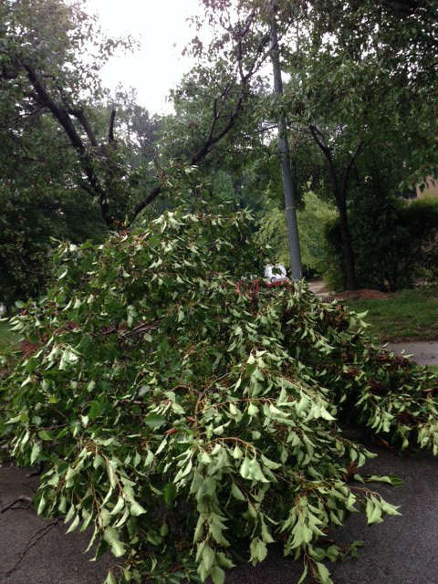 Thunderstorms dumped heavy rain and downed some trees in parts of central North Carolina Wednesday afternoon. This tree fell along Aviation Parkway in Cary. <span class=meta>WTVD Photo/ I-Witness Photo/Mary Balbo</span>