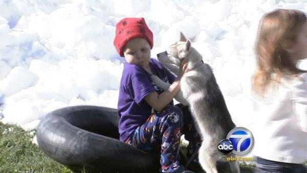 Snow trucked in from mtn for boy with cancer