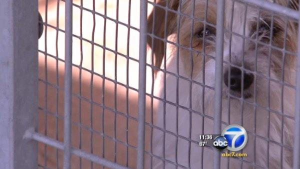 LA official wants to ban puppy mill pet sales