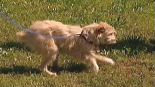 'Tornado dog' gets surgery on broken legs
