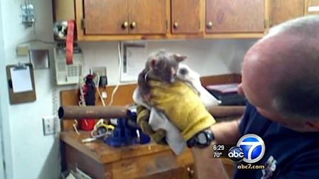 Firefighters had to cut a pipe in half to rescue a little kitten that got stuck in a pipe in Redding, California.
