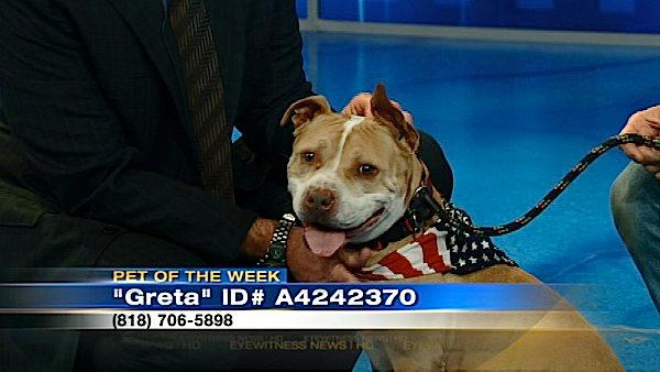 Pet of the Week: 5-year-old Pit Bull