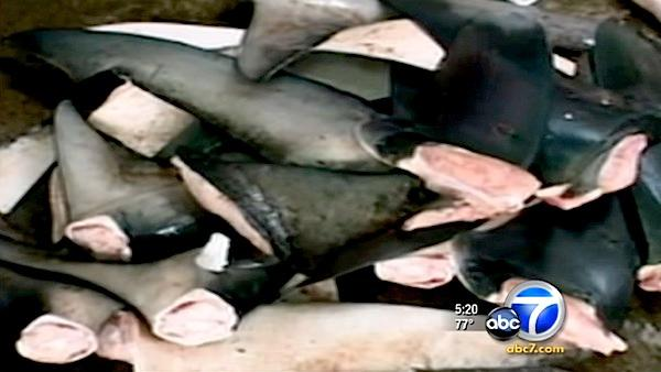 Senate considers state ban on shark-fin trade