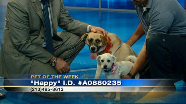 Pets of the Week: Terrier mix, Husky mix
