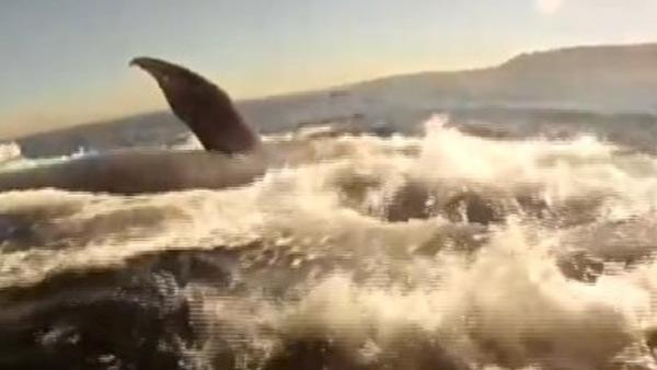 Kayaker rides alongside whale off SoCal coast
