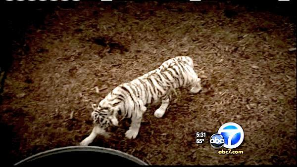 Zoo owner sets animals free, then kills self