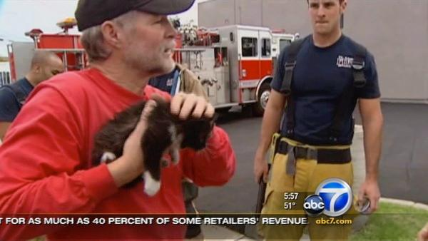Kitten rescued; spent Thanksgiving in pipe