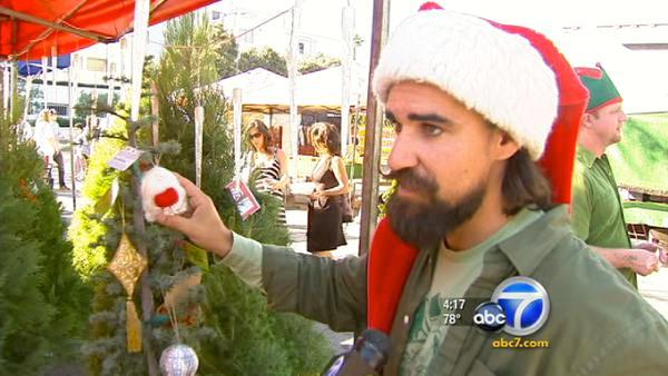 'Living' Christmas trees eco-friendly option