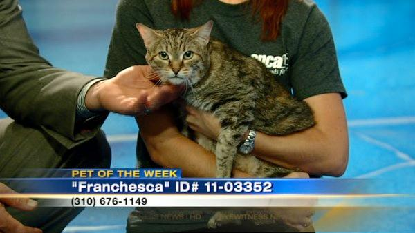 Pet of Week: Cat named Franchesca