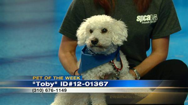 Pet of the Week: 1-year-old Maltese mix