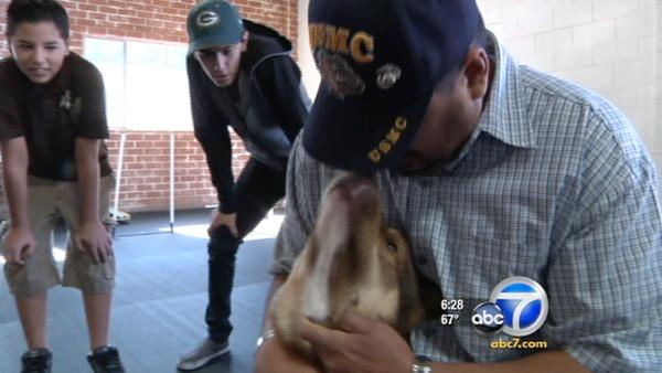 Rescued dog 'Nemo' reunited with family