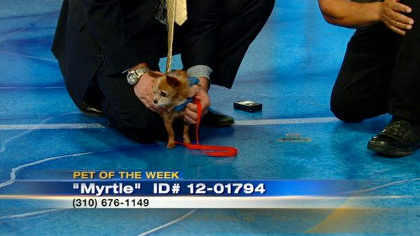 Pet of the Week: Myrtle the Terrier mix