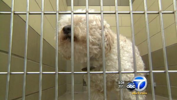 Animal shelter defunding has activists alarmed