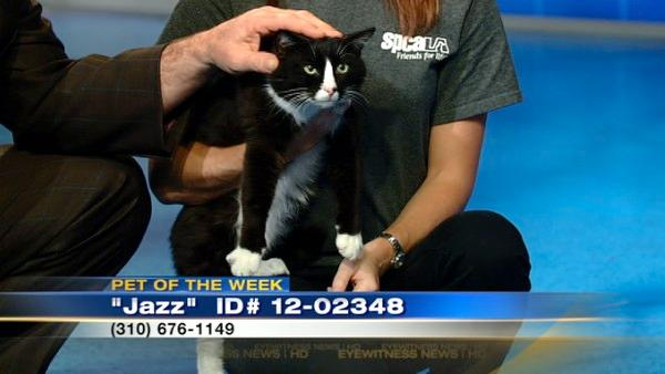 Pet of Week: 2-year-old cat named Jazz