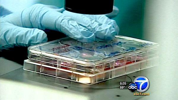 Prop. 71 stem cell research funds drying up
