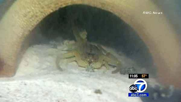 LB drug raid turns up pot, exotic animals