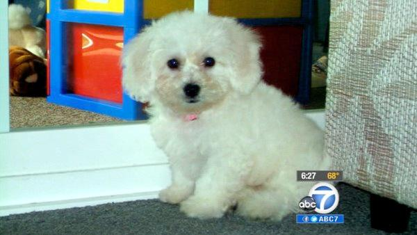 Lost dog reunited w/ owner thanks to microchip