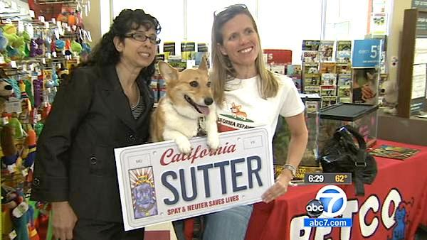 Brown promotes custom plates for pet lovers