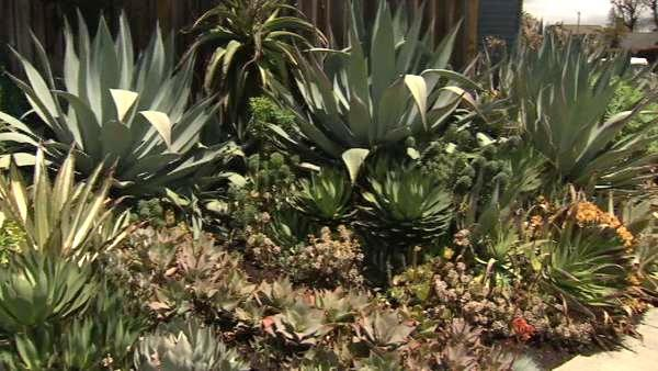 Venice tours showcase unique homes, gardens