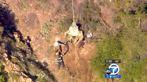 OC crew airlifts stranded horses out of canyon