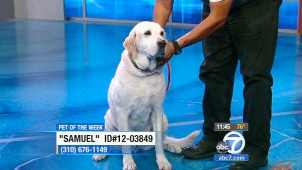 Pet of the Week: 10-year-old Yellow Lab mix