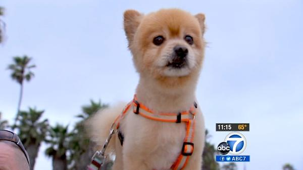 Venice 'Lion' dog reunited with owner