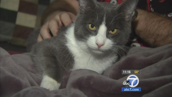 Cat owner's pics help raise funds for surgery