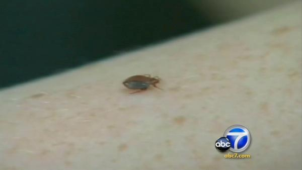 Dhs Bed Bugs