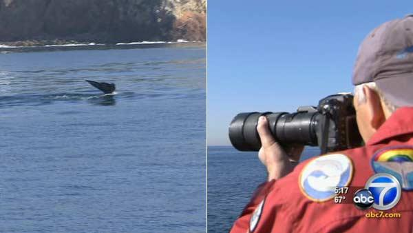 Whale, dolphin sightings kick off season