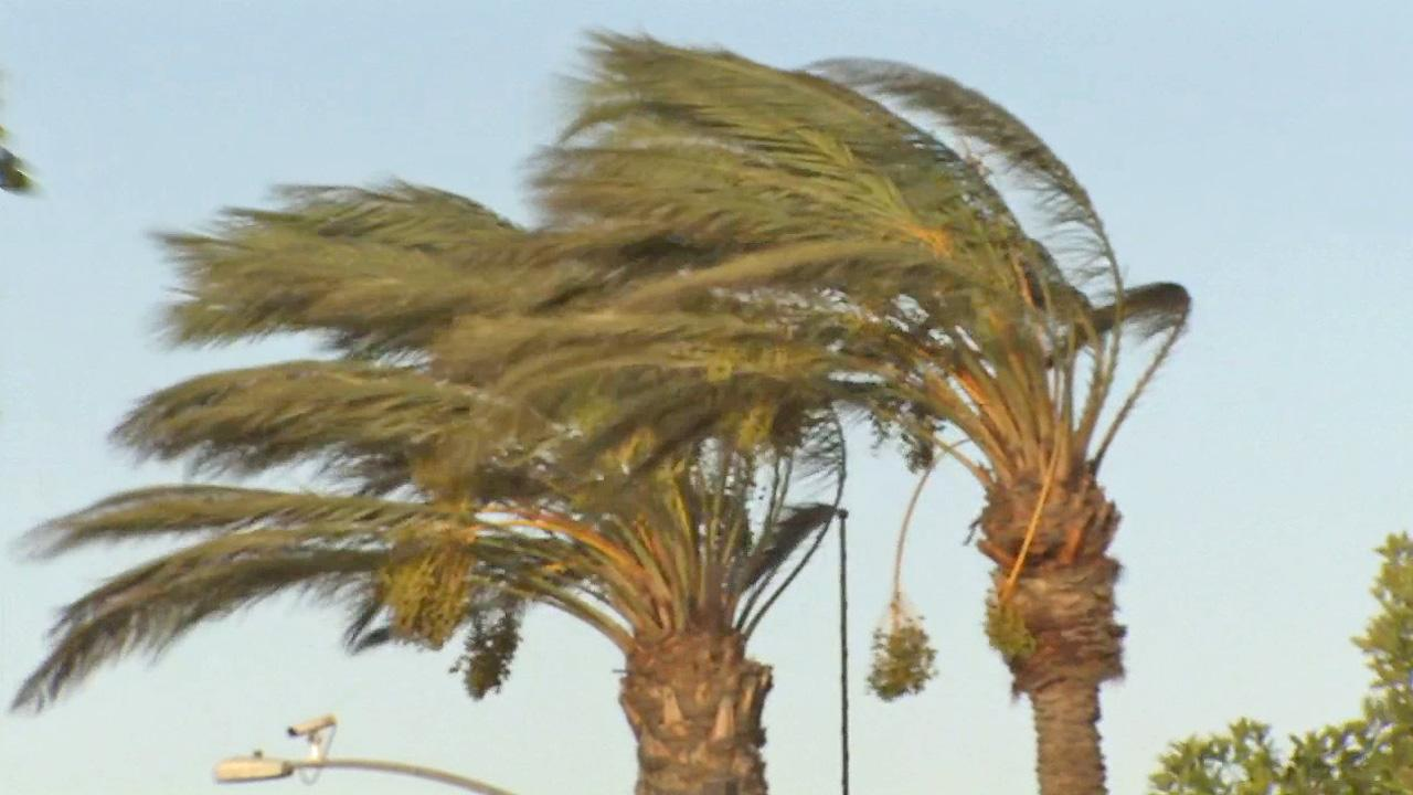 The Santa Ana winds blow through palms trees in Fontana on Friday, Oct. 4, 2013.