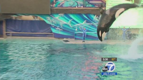 CA bill would ban orcas in SeaWorld shows