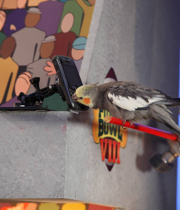 "<div class=""meta ""><span class=""caption-text "">Animal Planet provided KABC-TV this image of a bird ""tweeting"" about the game. (Photo courtesy of Animal Planet / Kim Holcombe)</span></div>"