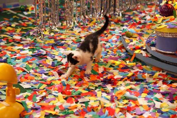 Animal Planet provided KABC-TV this image a kitten playing during Kitty Half-time. <span class=meta>(Photo courtesy of Animal Planet &#47; Kim Holcombe)</span>